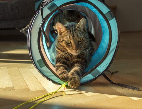 5 Ways to Ensure Your Indoor Cat is Feel-ine Enriched